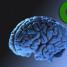Il nostro cervello si aggiorna – Brain 2.0